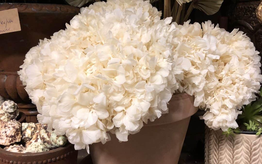 Forskjellen mellom tørkede- og bevarte blomster