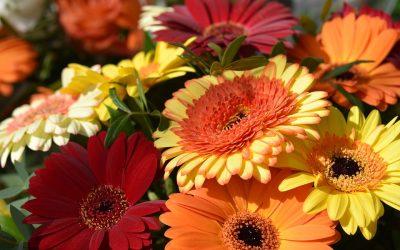 Noen av blomsterartene
