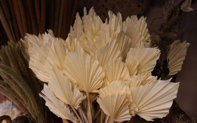 Tørkede palmeblad/palmespyd – Palmspear